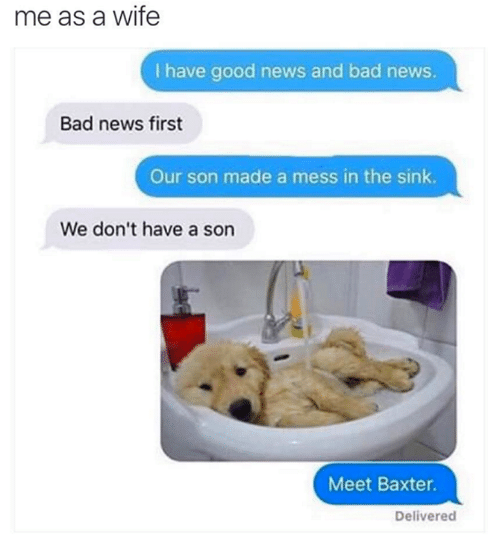 🤖: me as a wife  l have good news and bad news.  Bad news first  Our son made a mess in the sink.  We don't have a son  Meet Baxter.  Delivered
