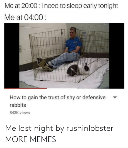 rabbits: Me at 20:00: Ineed to sleep early tonight  Me at 04:00  How to gain the trust of shy or defensive  rabbits  843K views Me last night by rushinlobster MORE MEMES