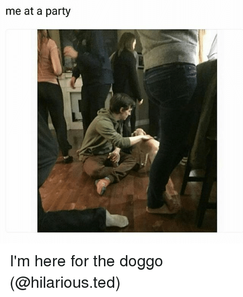 Funny, Party, and Ted: me at a party I'm here for the doggo (@hilarious.ted)