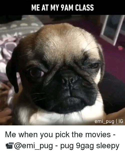 9gag, Memes, and Movies: ME AT MY 9AM CLASS  emi_pug IG Me when you pick the movies - 📹@emi_pug - pug 9gag sleepy