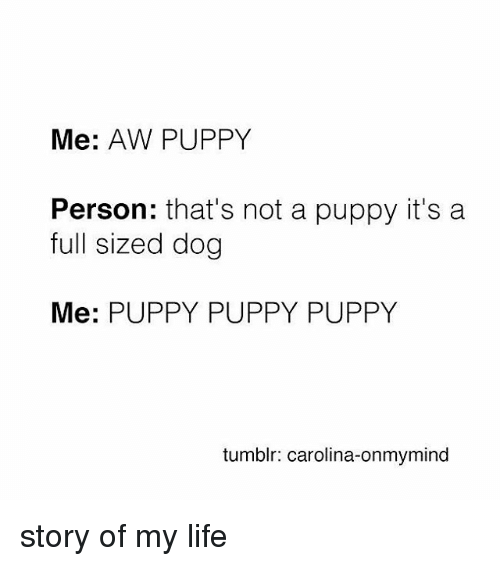 Relatable, Aws, and Carolina: Me: AW PUPPY  Person  that's not a puppy it's a  full sized dog  Me: PUPPY PUPPY PUPPY  tumblr: carolina-onmymind story of my life