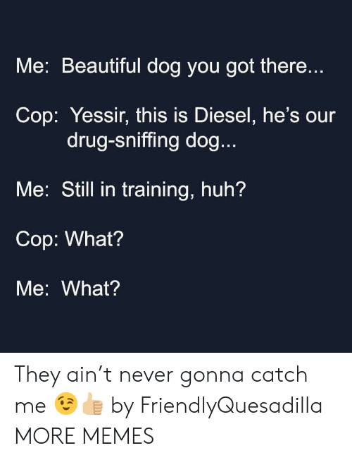 Diesel: Me: Beautiful dog you got there...  Cop: Yessir, this is Diesel, he's our  drug-sniffing dog...  Me: Still in training, huh?  Cop: What?  Me: What? They ain't never gonna catch me 😉👍🏼 by FriendlyQuesadilla MORE MEMES