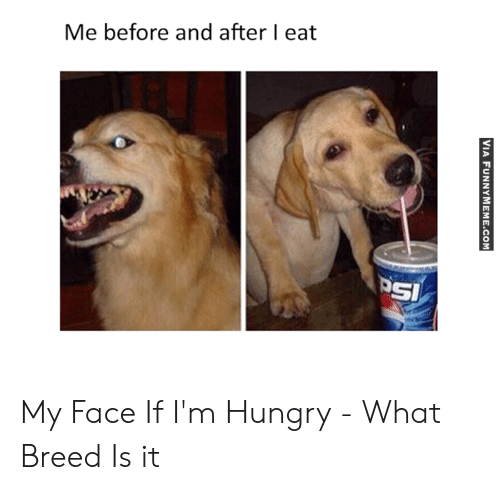 Hungry Memes: Me before and after I eat  SI My Face If I'm Hungry - What Breed Is it