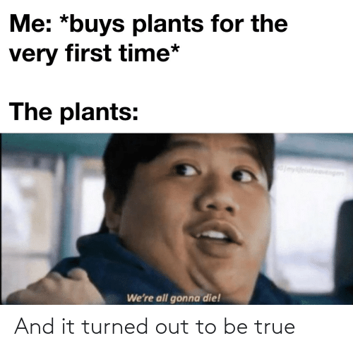 plants: Me: *buys plants for the  very first time*  The plants:  myldeistheavengen  We're all gonna die! And it turned out to be true