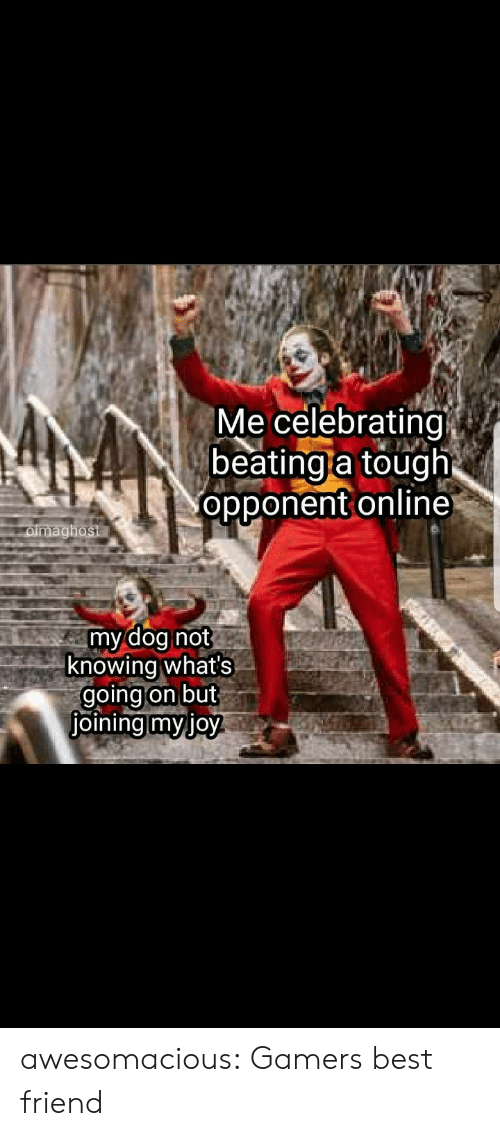 celebrating: Me celebrating  beating a tough  opponent online  oimaghost  my dog not  knowing what's  going on but  joining myjoy awesomacious:  Gamers best friend
