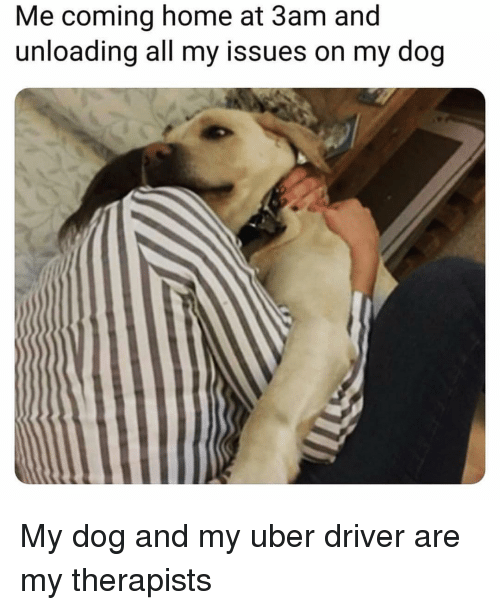 Uber, Home, and Uber Driver: Me coming home at 3am and  unloading all my issues on my dog My dog and my uber driver are my therapists