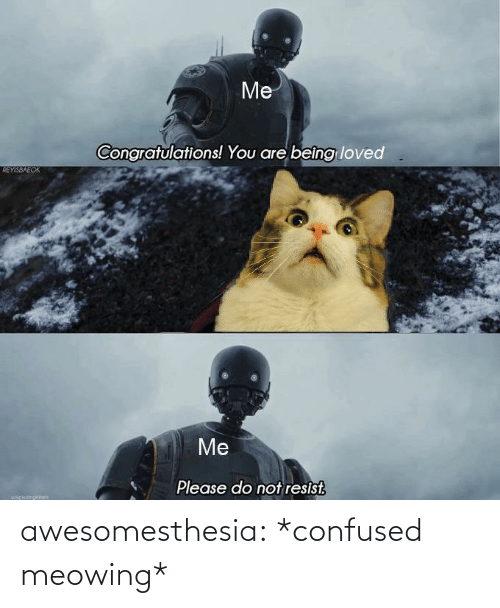 Please Do Not: Me  Congratulations! You are beîng loved  REYISBAEOK  Me  Please do not resist.  uapiocinokch awesomesthesia:  *confused meowing*