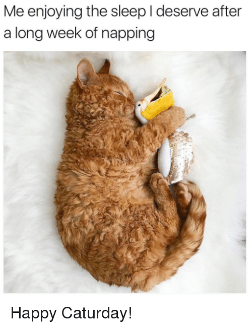 Caturday, Memes, and Happy: Me enjoying the sleep l deserve after  a long week of napping Happy Caturday!