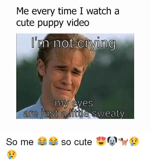 Sweaties: Me every time I watch a  cute puppy video  m not crying  my eyes  are just  a little sweaty So me 😂😂 so cute 😍🐶🐕😢😢