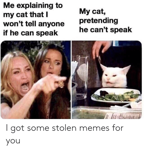 Got Some: Me explaining to  my cat that I  won't tell anyone  if he can speak  My cat,  pretending  he can't speak I got some stolen memes for you