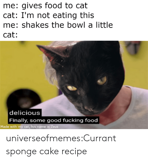 sponge: me: gives food to cat  cat: I'm not eating this  me: shakes the bowl a little  cat:   delicious  Finally, some good fucking food  Made with my cat, his name is Zeus universeofmemes:Currant sponge cake recipe