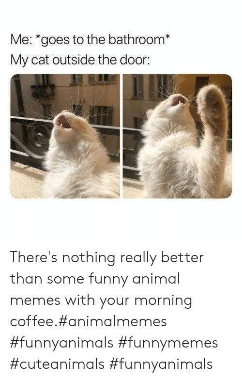 funny animal memes: Me: *goes to the bathroom*  My cat outside the door: There's nothing really better than some funny animal memes with your morning coffee.#animalmemes #funnyanimals #funnymemes #cuteanimals #funnyanimals