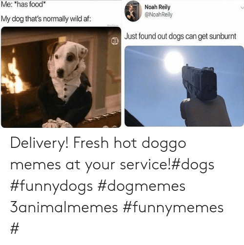 Doggo Memes: Me: *has food*  Noah Reily  @NoahReily  My dog that's normally wild af:  Just found out dogs can get sunburnt Delivery! Fresh hot doggo memes at your service!#dogs #funnydogs #dogmemes 3animalmemes #funnymemes #