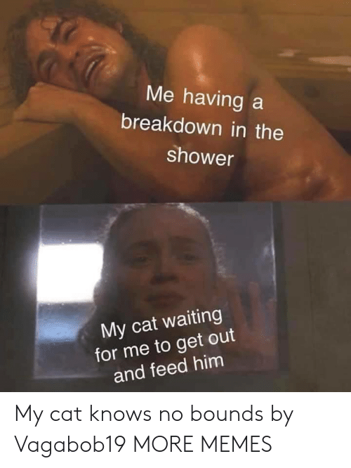 breakdown: Me having a  breakdown in the  shower  My cat waiting  for me to get out  and feed him My cat knows no bounds by Vagabob19 MORE MEMES