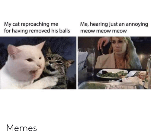 meow meow: Me, hearing just an annoying  My cat reproaching me  for having removed his balls  meow meow meow Memes