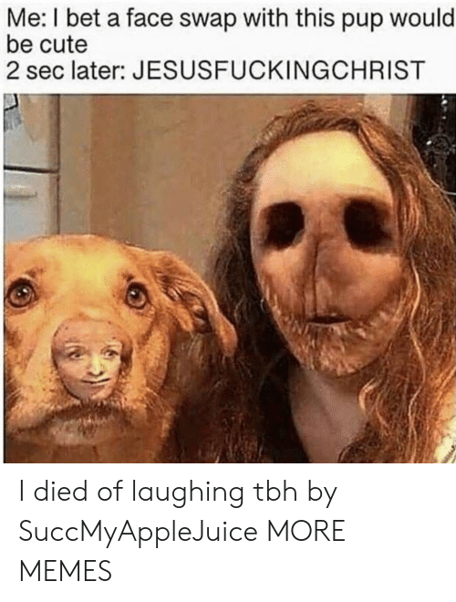swap: Me: I bet a face swap with this pup would  be cute  2 sec later: JESUSFUCKINGCHRIST I died of laughing tbh by SuccMyAppleJuice MORE MEMES