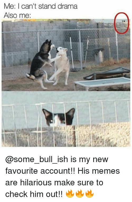 Memes, 🤖, and Drama: Me: I can't stand drama  Also me: @some_bull_ish is my new favourite account!! His memes are hilarious make sure to check him out!! 🔥🔥🔥