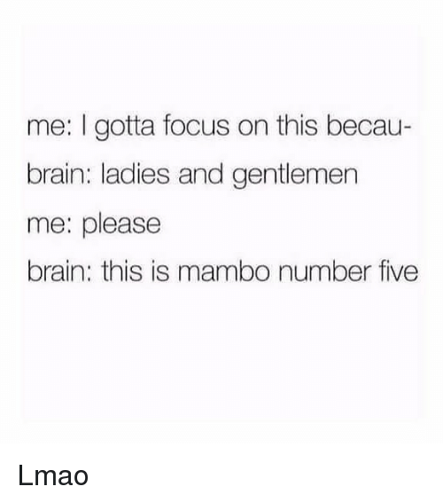 Lmao, Memes, and Brain: me: I gotta focus on this becau-  brain: ladies and gentlemen  me: please  brain: this is mambo number five Lmao