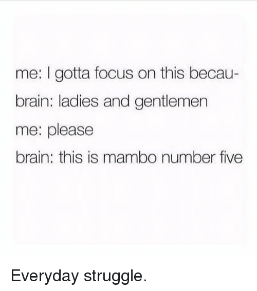 Memes, Struggle, and Brain: me: I gotta focus on this becau-  brain: ladies and gentlemen  me: please  brain: this is mambo number five Everyday struggle.