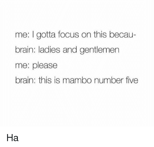 Brains, Dank, and Brain: me: I gotta focus on this becau-  brain: ladies and gentlemen  me: please  brain: this is mambo number five Ha