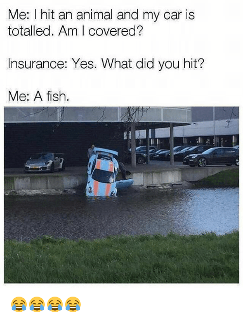 Animal, Fish, and Girl Memes: Me: I hit an animal and my car is  totalled. Am I covered?  Insurance: Yes. What did you hit?  Me: A fish.  1 😂😂😂😂