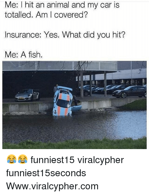 Funny, Animal, and Fish: Me: I hit an animal and my car is  totalled. Am I covered?  Insurance: Yes. What did you hit?  Me: A fish 😂😂 funniest15 viralcypher funniest15seconds Www.viralcypher.com