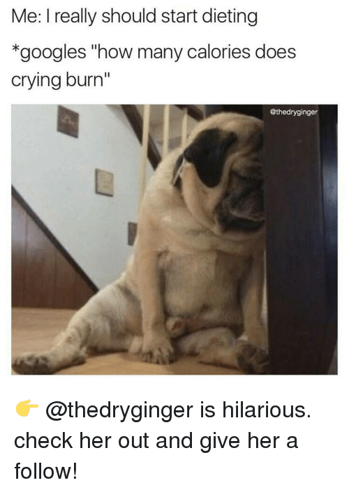 """Crying, Dieting, and Memes: Me: I really should start dieting  *googles """"how many calories does  crying burn''  @thedryginger 👉 @thedryginger is hilarious. check her out and give her a follow!"""