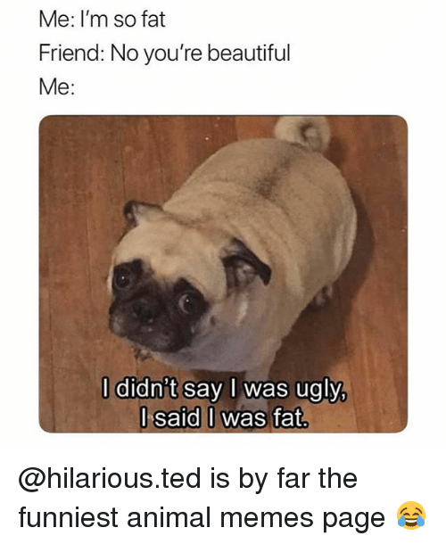 Beautiful, Memes, and Ted: Me: I'm so fat  Friend: No you're beautiful  Me:  l didn't say I was ugly,  l said I was fat @hilarious.ted is by far the funniest animal memes page 😂