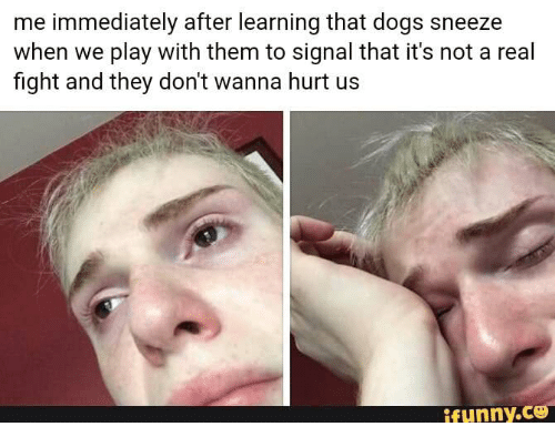 do dogs sneeze to show they are playing