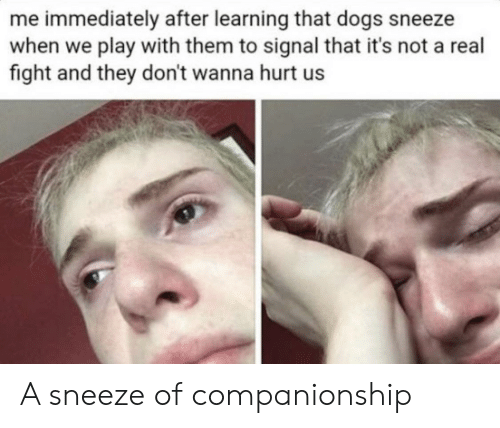 Signal: me immediately after learning that dogs sneeze  when we play with them to signal that it's not a real  fight and they don't wanna hurt us A sneeze of companionship