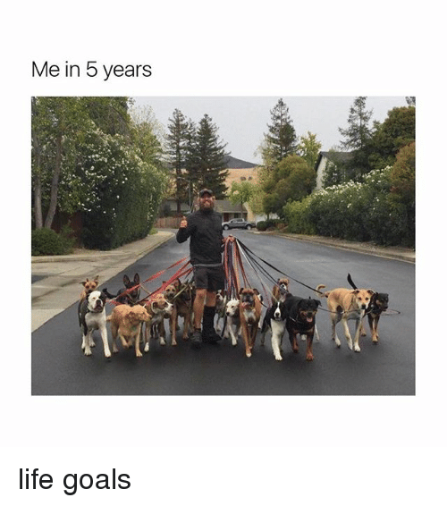 Goals, Life, and Girl Memes: Me in 5 years life goals