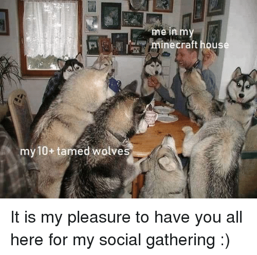 hous: me in m  minecraft hous  my 10+ tamed wolves It is my pleasure to have you all here for my social gathering :)
