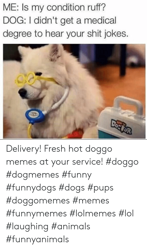 Doggo Memes: ME: Is my condition ruff?  DOG: I didn't get a medical  degree to hear your shit jokes. Delivery! Fresh hot doggo memes at your service! #doggo #dogmemes #funny #funnydogs #dogs #pups #doggomemes #memes #funnymemes #lolmemes #lol #laughing #animals #funnyanimals