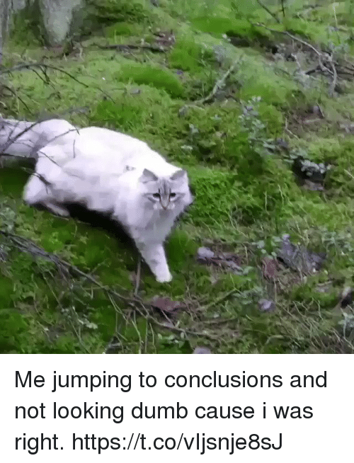 Dumb, Girl Memes, and Looking: Me jumping to conclusions and not looking dumb cause i was right. https://t.co/vIjsnje8sJ