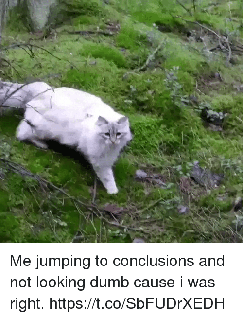 Dumb, Girl Memes, and Looking: Me jumping to conclusions and not looking dumb cause i was right. https://t.co/SbFUDrXEDH