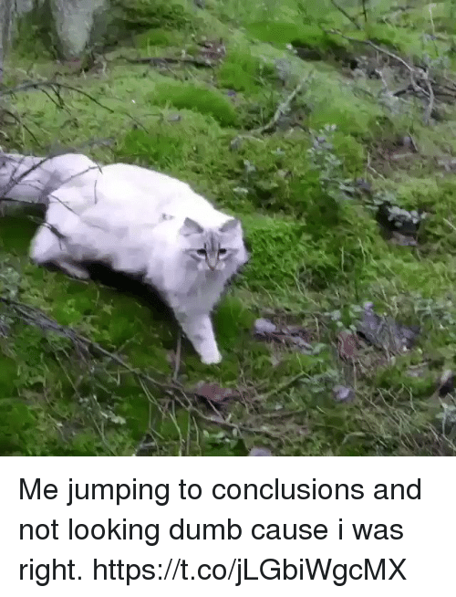 Dumb, Girl Memes, and Looking: Me jumping to conclusions and not looking dumb cause i was right. https://t.co/jLGbiWgcMX