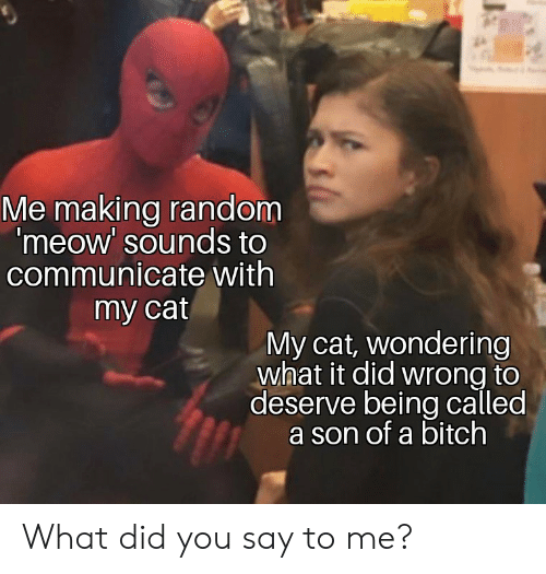 Cat, Random, and Did: Me making random  'meow' sounds to  communicate with  my cat  My cat, wondering  what it did wrong to  deserve being called  a son of a bitch What did you say to me?