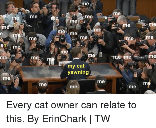 Dank, 🤖, and Cat: me  me  me  me  ne  meye  me  me me  me  me  me  me  me i  me  me  me  rm  me  my cat  yawning  me  me  me  me  me Every cat owner can relate to this.  By ErinChark | TW