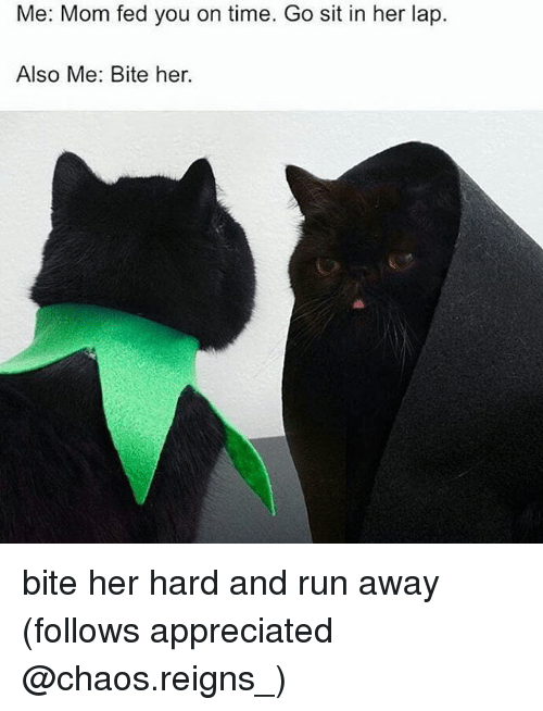 Memes, Run, and Time: Me: Mom fed you on time. Go sit in her lap.  Also Me: Bite her. bite her hard and run away (follows appreciated @chaos.reigns_)