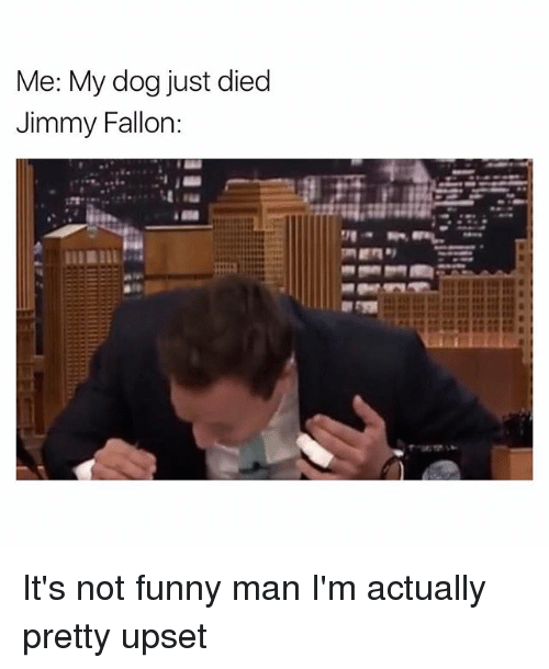 Funny, Jimmy Fallon, and Dog: Me: My dog just died  Jimmy Fallon: It's not funny man I'm actually pretty upset