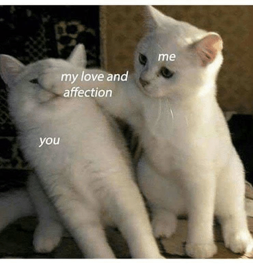 Love, You, and Affection: me  my love and  affection  you