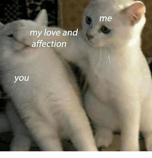 Love, Dank Memes, and You: me  my love and  affection  you