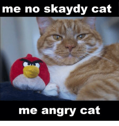 angry cat meme no - photo #8