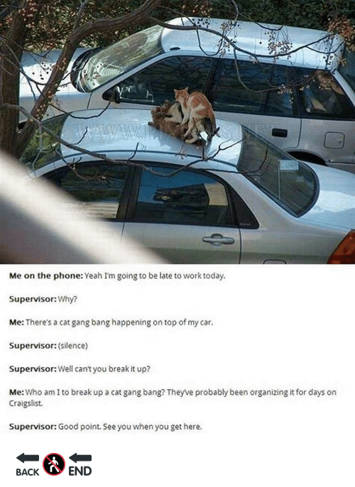 Cat Gang Bang: Me on the phone  Yeah I'm going to be late to work today.  Supervisor:  Why?  Me: There's a cat gang bang happening on top of my car.  Supervisor: (silence)  Supervisor: Well can't you break it up?  Me  Who am I to break up a cat gang bang? Theywe probably been organizing it for days on  Craigslist.  Supervisor: Good point. Seeyou when you get here. 🔙🚷🔚