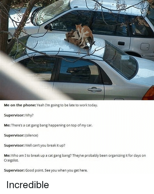 Cat Gang Bang: Me on the phone  Yeah I'm going to be late to work today.  Supervisor:  Why?  Me: There's a cat gangbang happening on top of my car.  Supervisor:  (Silence)  Supervisor: Well can't you break it up?  Me: Who am I to break up a cat gang bang? Theyve probably been organizing it for days on  Craigslist.  Supervisor: Good point. See you when you get here. Incredible