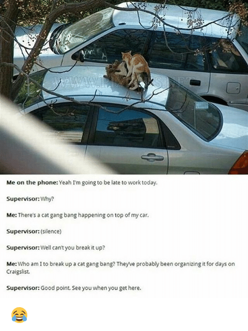 Cat Gang Bang: Me on the phone: Yeah I'm going to be late to work today.  Supervisor: Why?  Me: There's a cat gang bang happening on top of my car.  Supervisor: (silence)  Supervisor:Well can't you break it up?  Me  Who am I to break up a cat gang bang? They ve probably been organizing it for days on  Craigslist.  Supervisor: Good point. See you when you get here. 😂