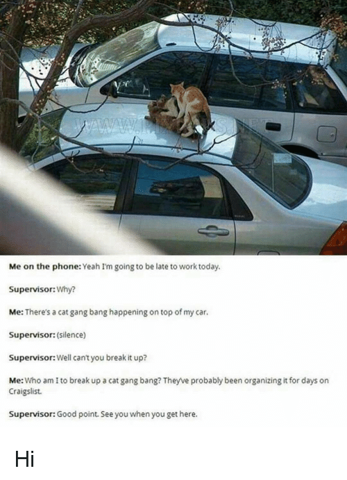 Cat Gang Bang: Me on the phone: Yeah I'm going to be late to work today.  Supervisor: Why?  Me: There's a cat gang bang happening on top of my car.  Supervisor: (silence)  Supervisor: Well can't you break it up?  Me  Who am I to break up a catgang bang? Theyve probably been organizing it for days on  Craigslist.  Supervisor:Good point. See you  when youget here. Hi
