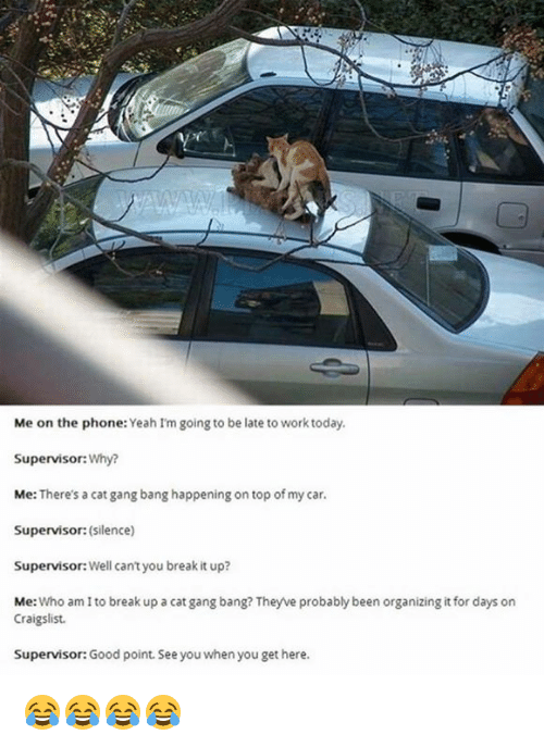 Craigslist, Memes, and Phone: Me on the phone  Yeah I'm going to be late to work today.  Supervisor: Why?  Me: There's a cat gang bang happening on top of my car.  Supervisor: (silence)  Supervisor: Well can't you break it up?  Met  Who am to break up a cat gang bang? Theyve probably been organizing it for days on  Craigslist.  Supervisor: Good point. See you when you get here. 😂😂😂😂