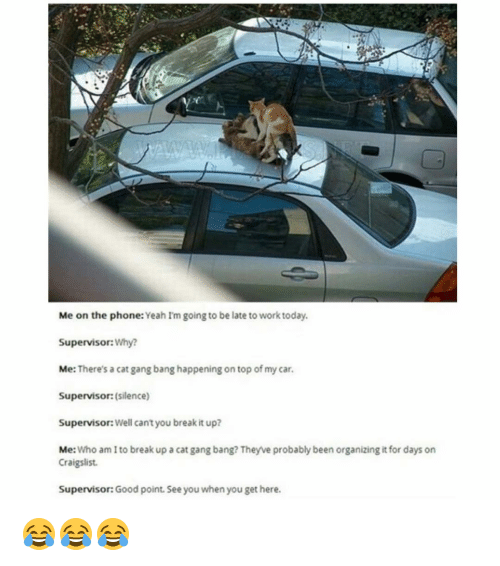 Cat Gang Bang: Me on the phone: Yeah Im going to be late to work today.  Supervisor: Why?  Me  There's a cat gang bang happening on top of my car.  Supervisor: (silence)  Supervisor: Well cantyou break it up?  Me  Who am to break up a cat gang bang? Theyve probably been organizing it for days on  Craigslist.  Supervisor: Good point. See you when you get here. 😂😂😂