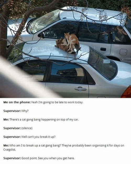 Cat Gang Bang: Me on the phone  Yeah Im going to be late to work today.  Supervisor: Why?  Me: There's a cat gang bang happening on top of my car.  Supervisor: (silence)  Supervisor Well cantyou break it up?  Me  Who am I to break up a cat gang bang? They ve probablybeen organizing it for days on  Craigslist.  Supervisor: Good point. See you when you get here.